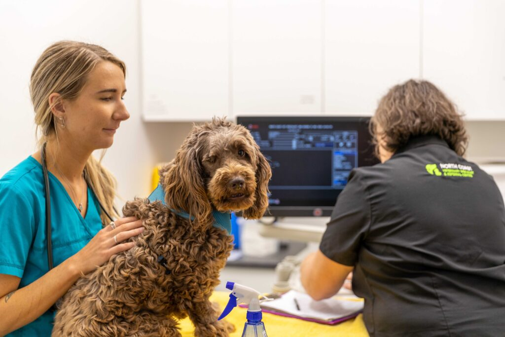 FAQ North Coast Veterinary Specialist