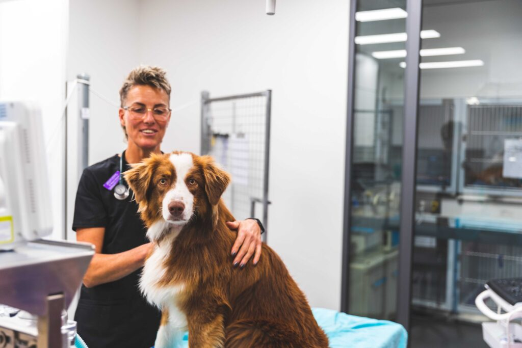 Pet Owners North Coast Veterinary Specialist