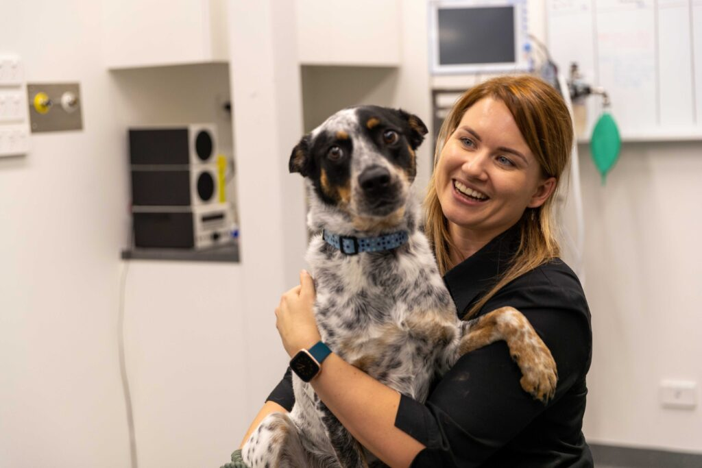 Veterinarians North Coast Veterinary Specialist