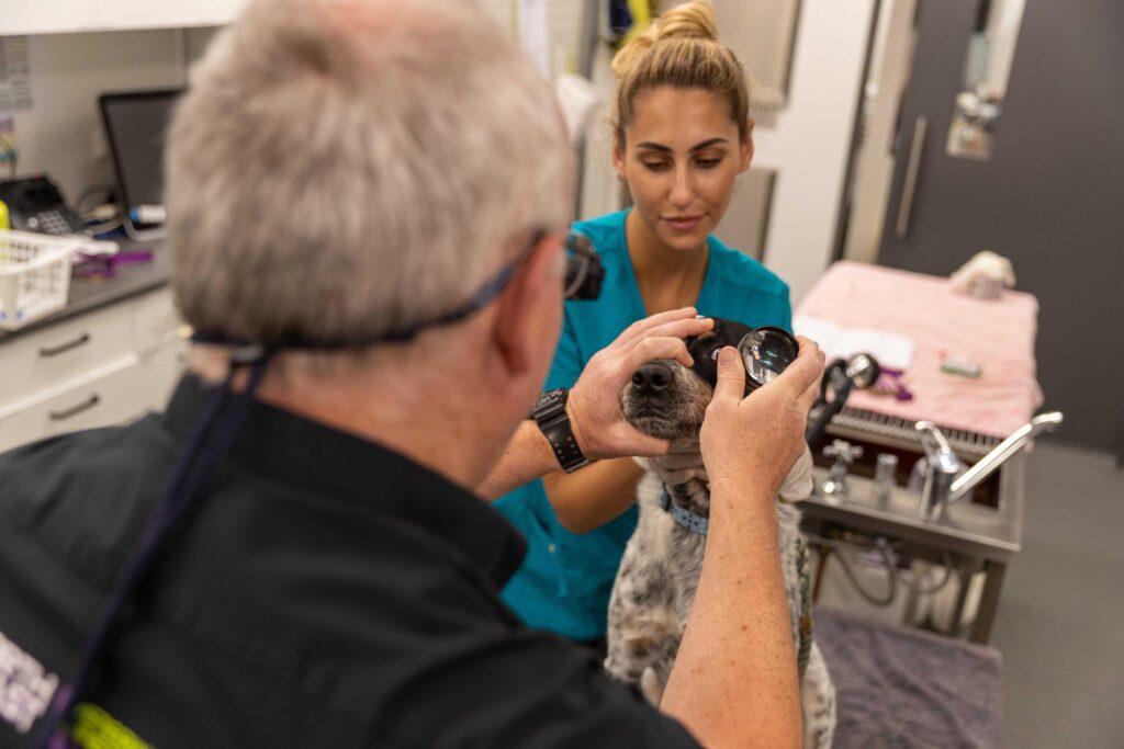 Opthamology North Coast Veterinary Specialist