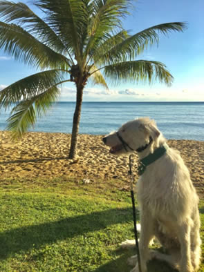 The story of Boris North Coast Veterinary Specialist