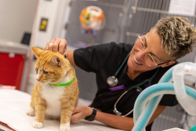 Careers North Coast Veterinary Specialist
