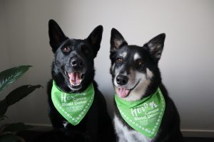 Pet Blood Donors