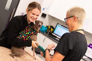 News & Blog North Coast Veterinary Specialist